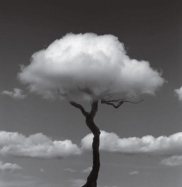 Virginia Duran Blog- Surreal Photography- Chema Madoz- Árbol