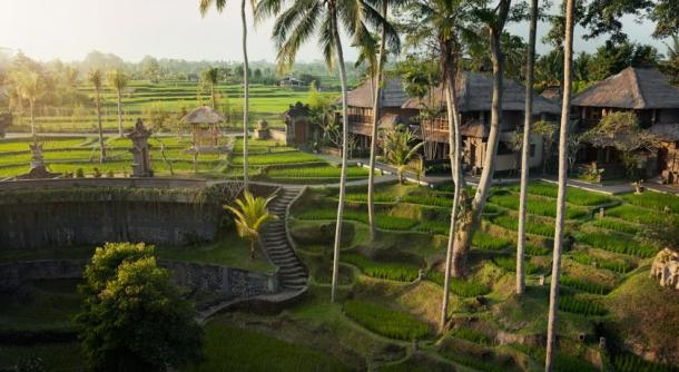 virginia-duran-blog-bali-ubud-rice-fields